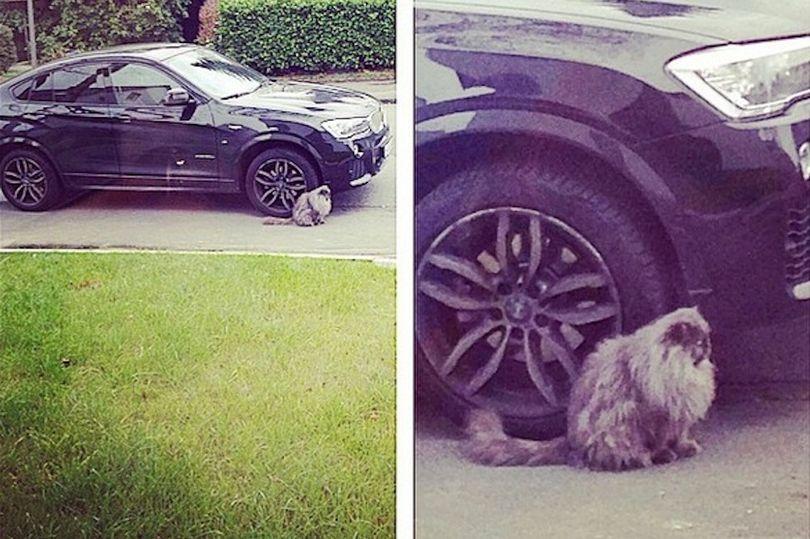 cat next to car
